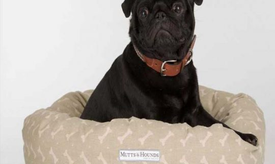 dog pet linen